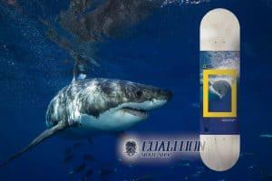 Tabla Skate Element Skateboards x National Geographic Greyson Fletcher Shark